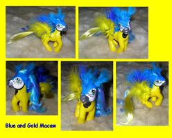 Blue and Gold Macaw by customlpvalley