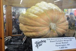 Topsfield Fair, A Great Pumpkin Top Winner by Miss-Tbones