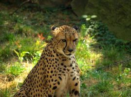 Philadelphia Zoo 114 by Dracoart-Stock