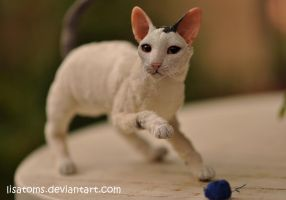 Toodles, the cornish rex cat- commission by LisaToms