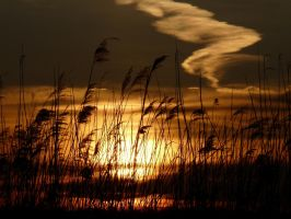 Between the Reeds by babynuke