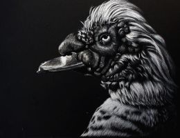 Muscovy duck Scratchboard by rasberry6