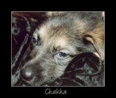 Chakka by Airgid
