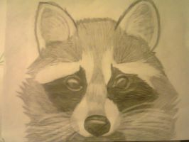 Racoon by Mitchthefoxcatwolf