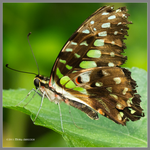Up Close Butterfly by Mogrianne
