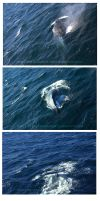 083 whale by BelialMadHatter