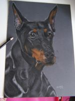 doberman by cuteart13