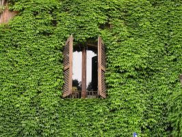 window 02 by Caltha-stock