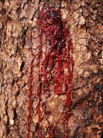Bleeding Tree by MissMaja