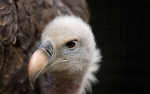 Vulture by The-Aperture