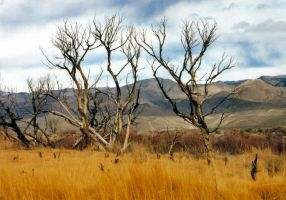 Burnt Trees On Owens River by Tkrain