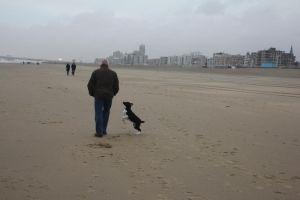 12-12-27 Mickey at Scheveningen 7 by Herdervriend