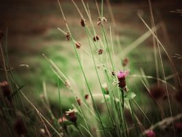 green cosmos by vanerich