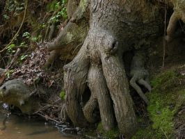 Rootbound 3 by HauntingVisionsStock