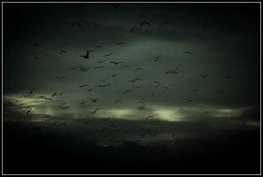 Birds in migration 01 by Bestarns
