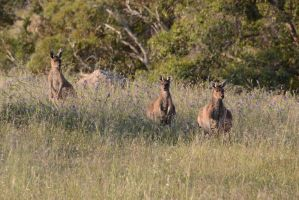 Some of out Furry Friends Watching us... by GrumpySnapper