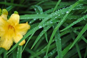 it rained by mikina