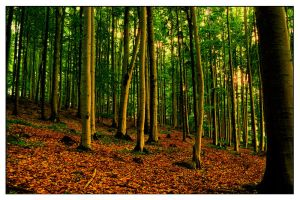 Forest stand by tomsumartin