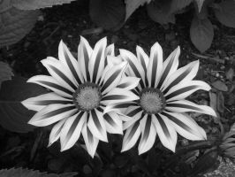 Flowers black/white by MasterTeska