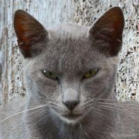 Grey cat face by Jorapache
