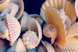 She Sell Seashells by atomicranchgal