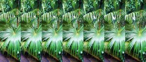 Seven Gang Stereoscopic Kew Palm House Fans by aegiandyad