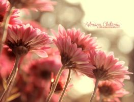 Pink Daisies by DD-a