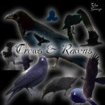 Crow Brush Set by faeryfroggy-stock