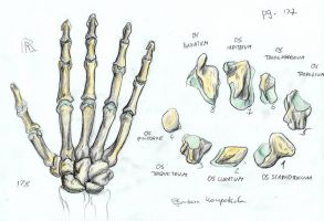 Bones of a right Hand by BK-81