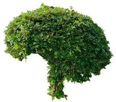 Small Green Bushy Tree PNG.. by AledJonesStockNArt