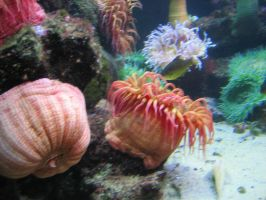 Sea Anemone 03 by LithiumStock