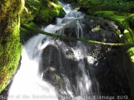 Heart of the Rainforest Hike 2013 15 by Mattsma