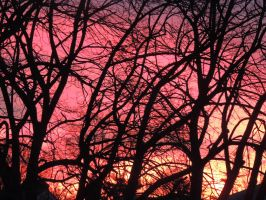 Pink Morning Burst by lyricaldancer4life
