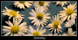 Serenity by ExquisiteDistraction