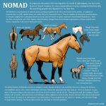Breed Reference: Nomad Horse by amberchrome