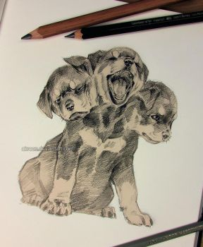 Cerberus puppy by akreon