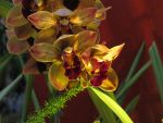 Orchids by GreyPezzola