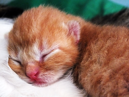 kitty 3 days old by Elvira1990