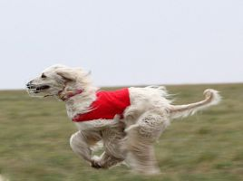 coursing by tyyneys