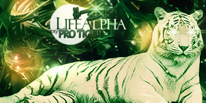 Tiger Sig. by LifeAlpha