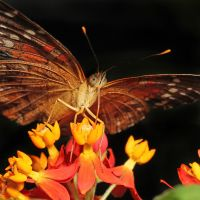 Butterfly on Flower 01 by s-kmp