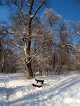 A bench in the snow by Cauldfield