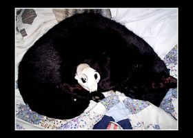 Black Cat Sleeps with Death by Black-Cats