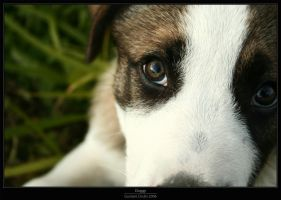 Doggy by Gustavs