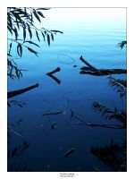 The Blue Swamp by Bioviral