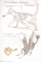 Feline-Avian Hybrid Anatomy_Teil1 by MaximWolf