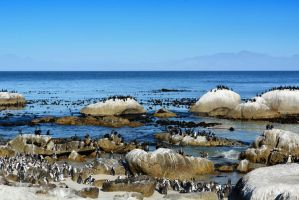 Boulders Beach by suffer1