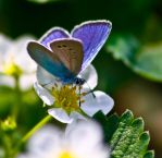 butterfly by ashcar