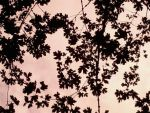 Leaves in the Sky by truelovedrug