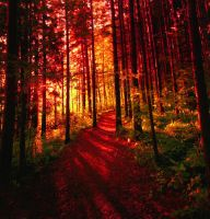 red forest .. by KariLiimatainen